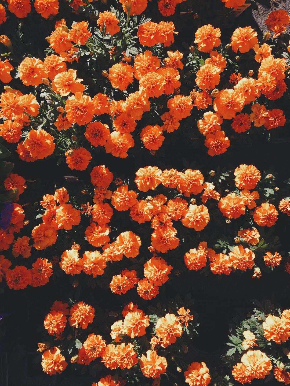 Pin By Rina Maeda On Super Pinterest Flowers Orange Aesthetic