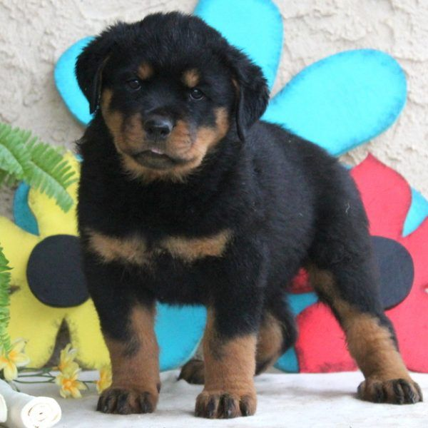 Pin On Puppies Of The Day