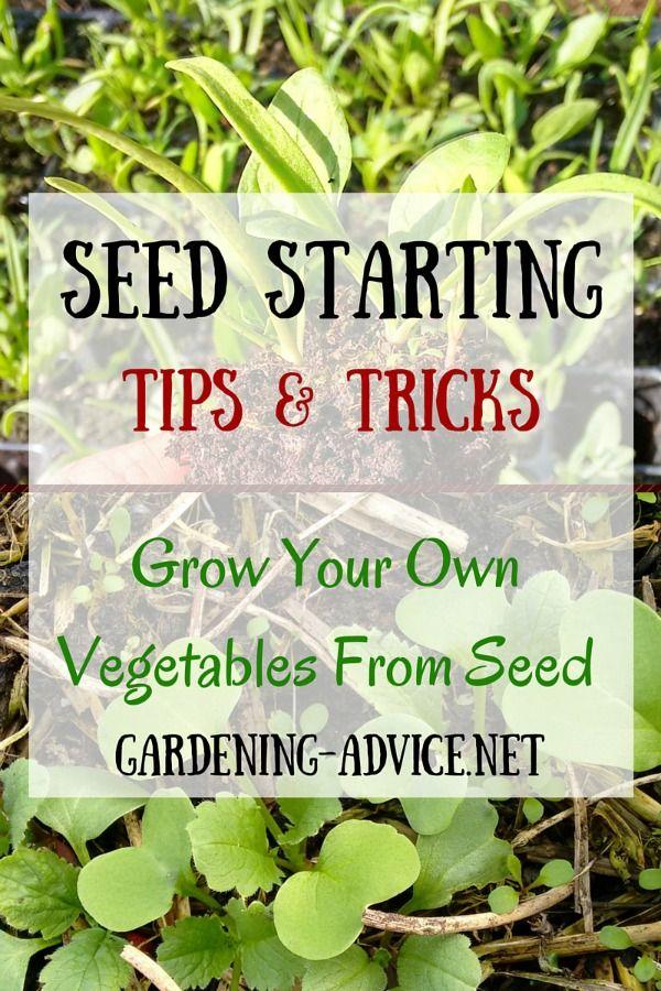 Success Tips For Starting Gardening Seeds Garden Seeds Planting Vegetables Growing Vegetables