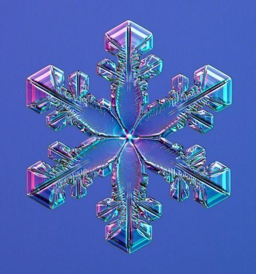#Schneeflocke, #Snowflake, #Frost, #Schneekristall, #SnowCrystal, #Eisblumen, #Frozen, #Winter, #Raureif, #Eiskristall, IceCrystal