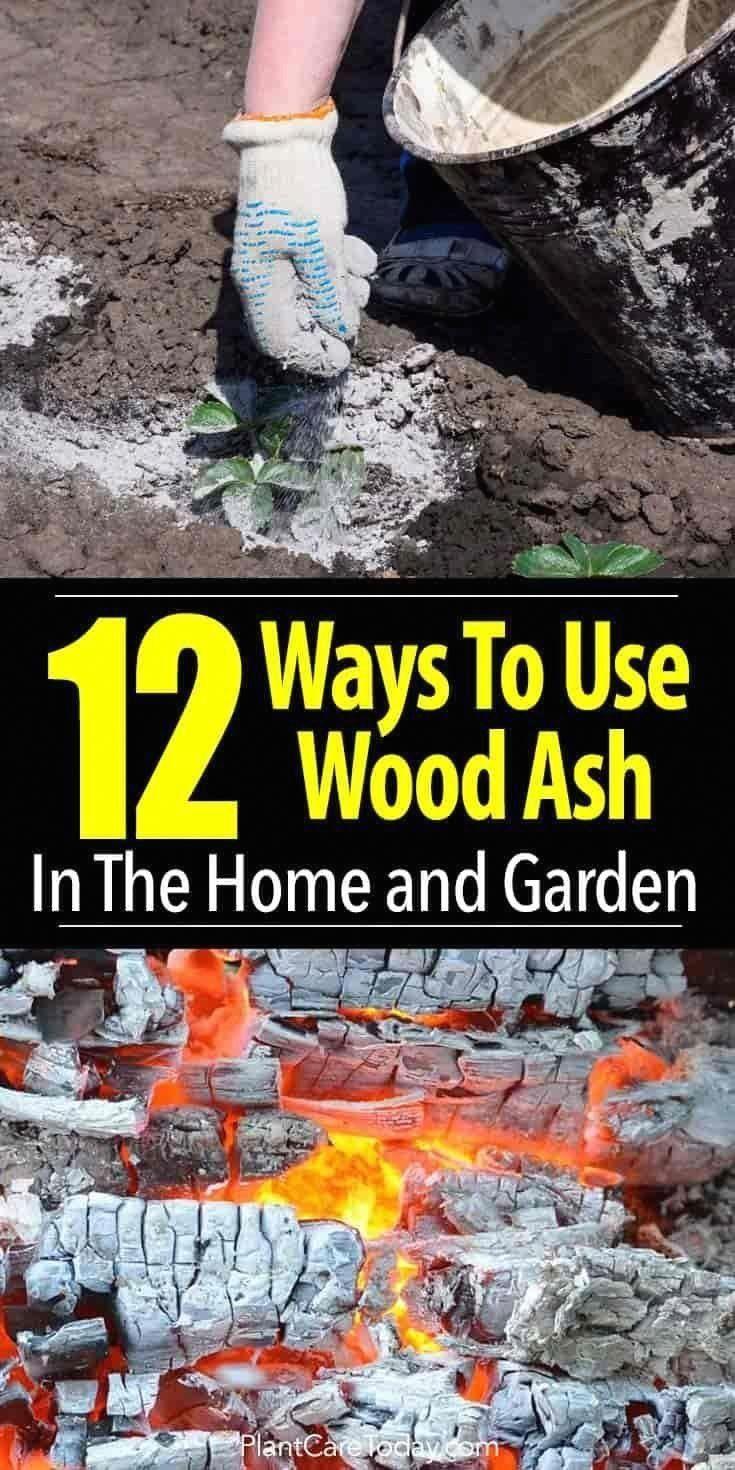 how to prepare soil for sod in arizona
