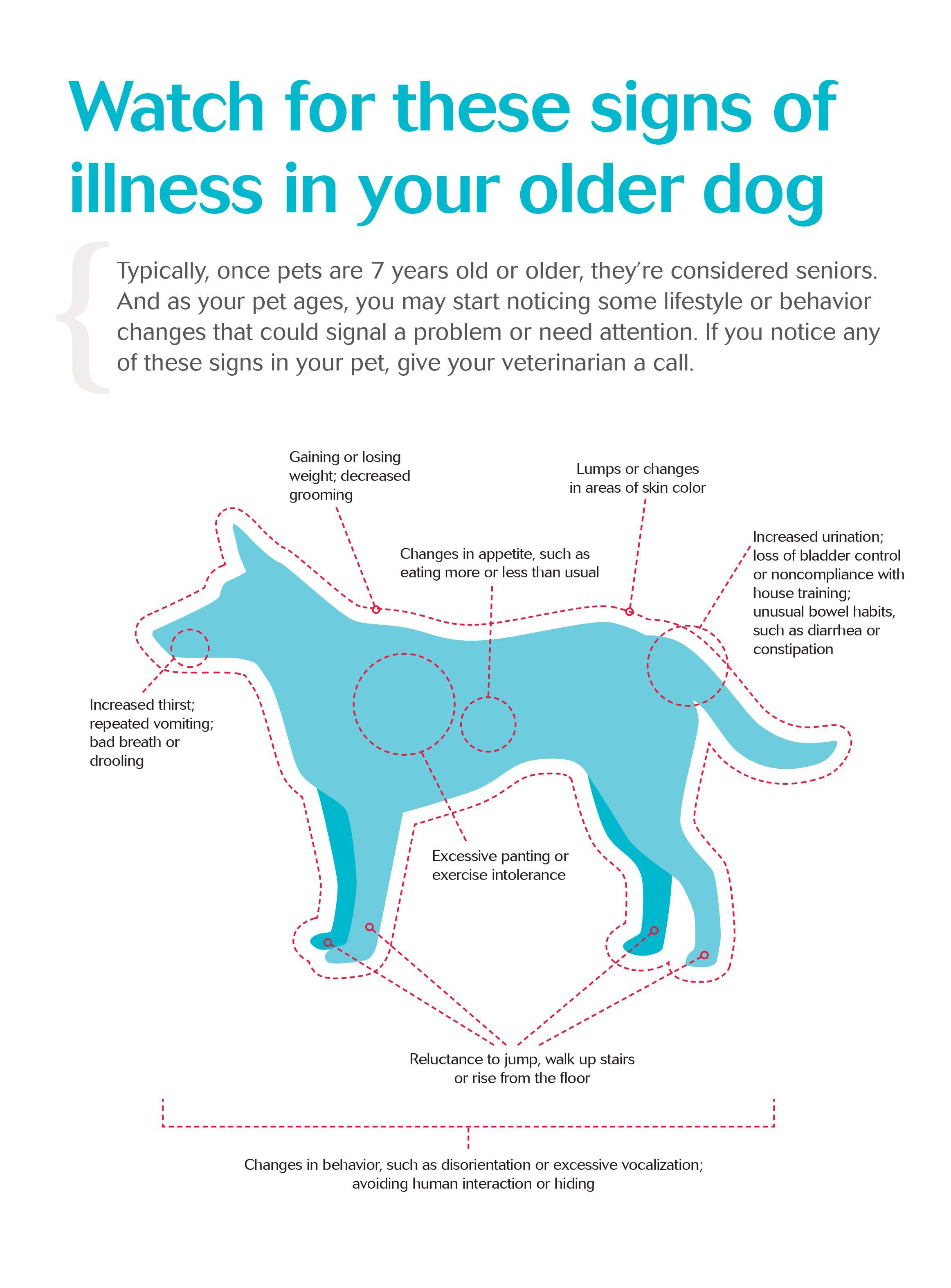 Signs Of Illness In Your Older Dog Dvm360 Senior Pet Care