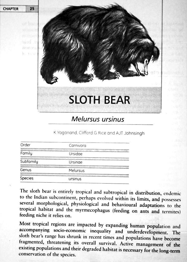Sloth bear, Osos perezoso, Melursus ursinus | Sloth Bears | Pinterest
