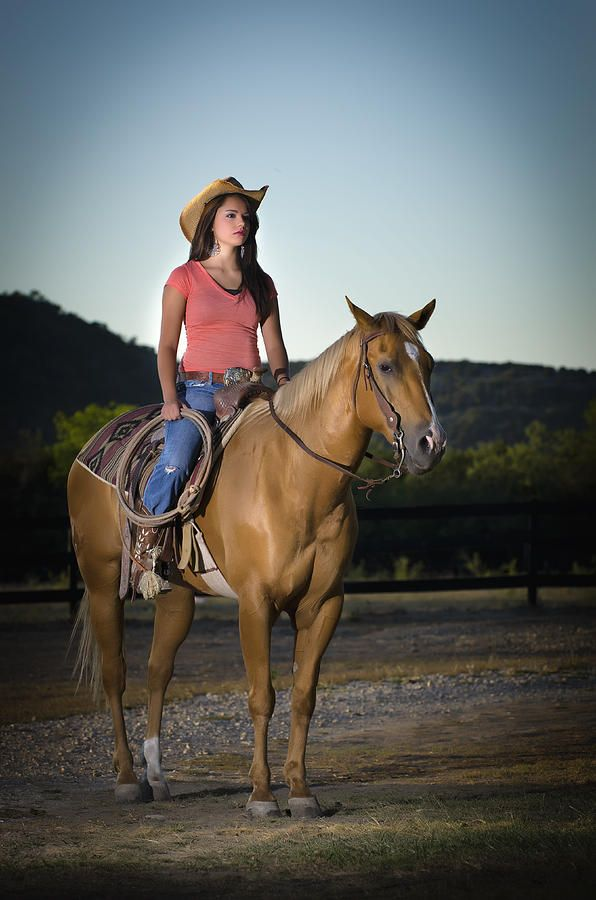 Beautiful Young Horses Run In Stock Footage Photo