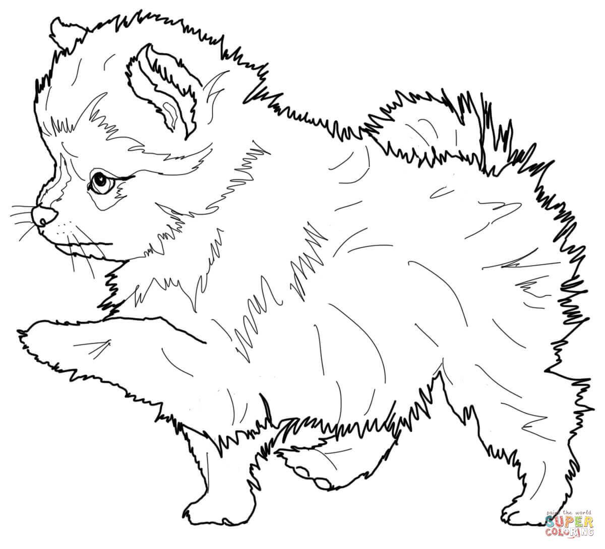 Pomeranian Puppy Super Coloring Dog Coloring Page