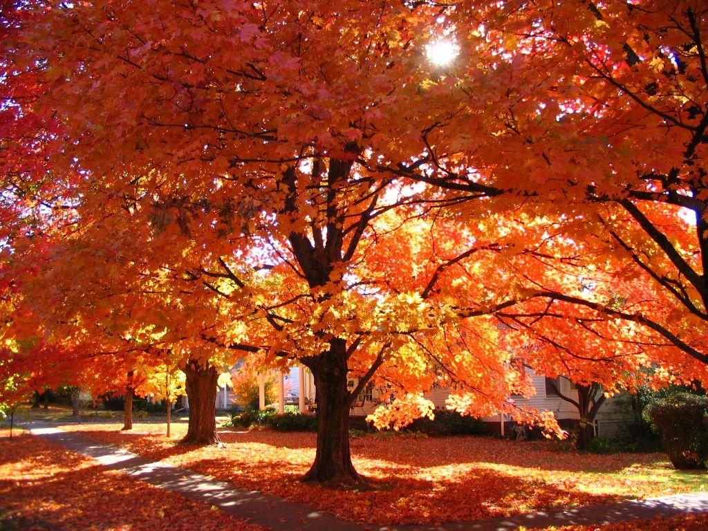 fall foliage  arkansas  fall foliage 1024 x 768 · jpeg
