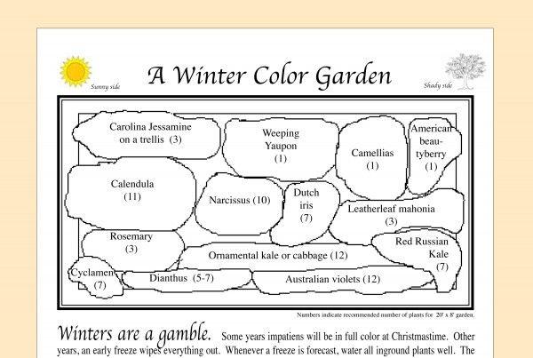 Winter Color Garden