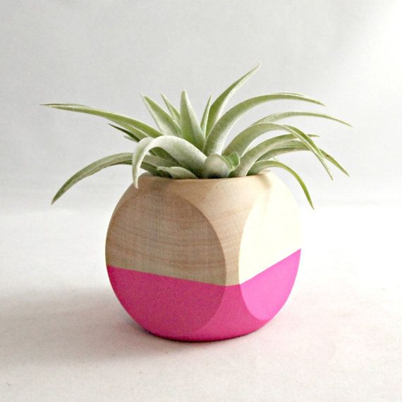 Neon Pink Air Plant Cube Planter With Tillandsia Hondurensis // Neon Pink - Natural Wood Colorblock // Home and Garden
