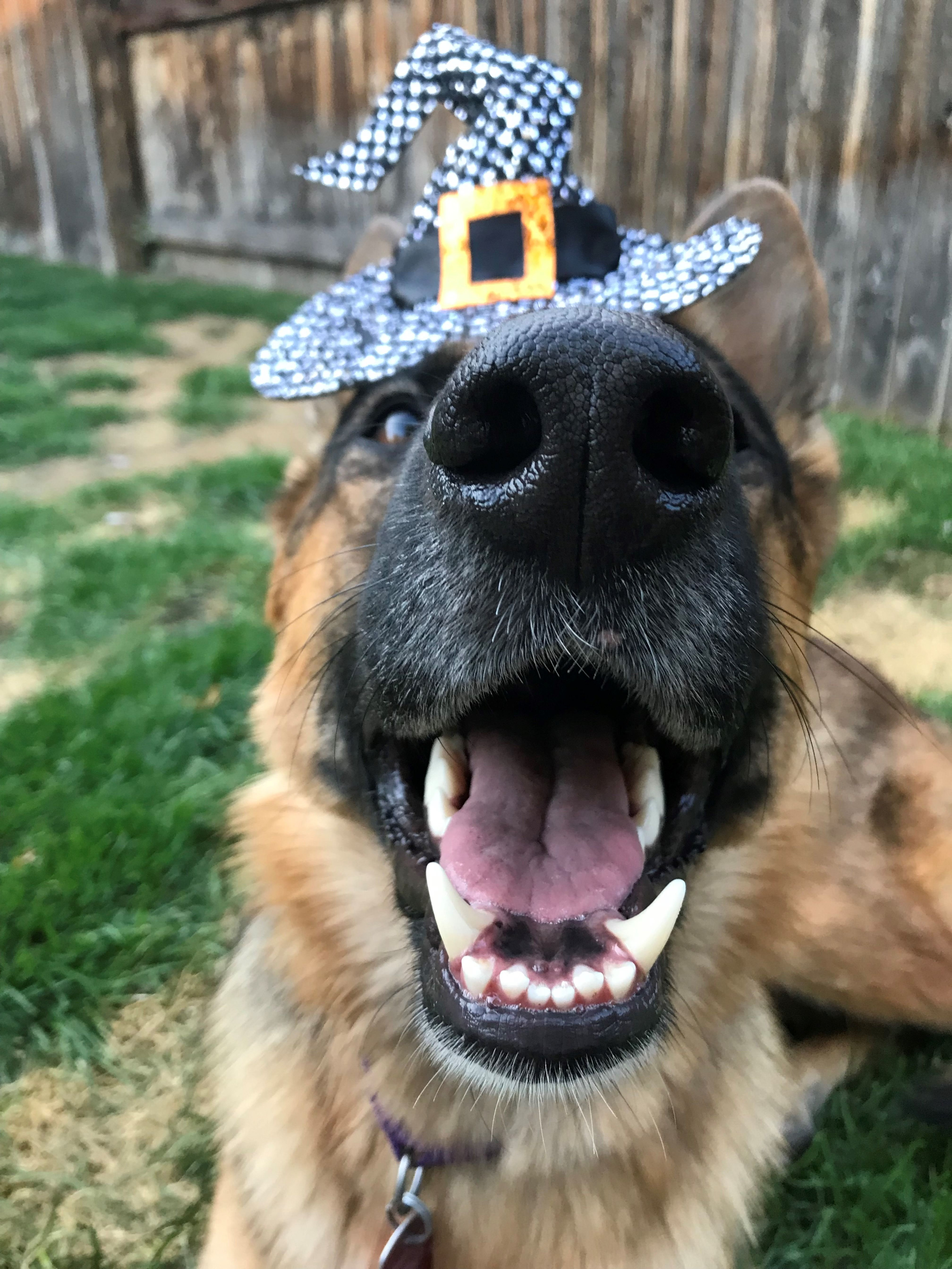 Simple Safety Tips To Keep Your Pets Happy And Safe This Halloween