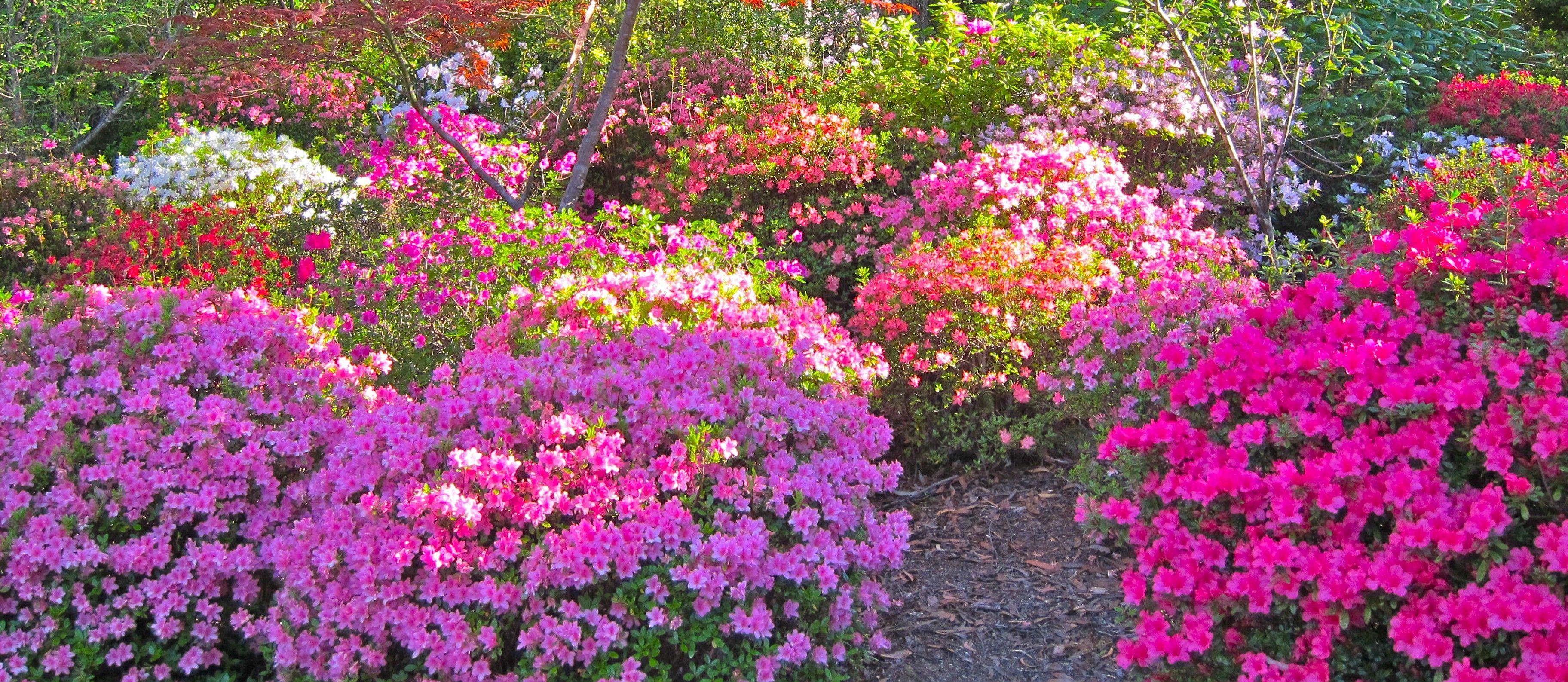 Rosliny Do Cienia Plants