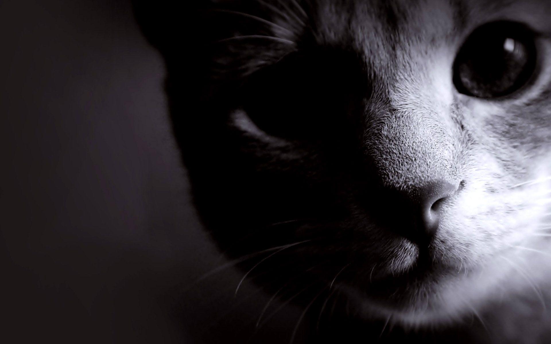 Shadow Cat Animal Wallpapers Hd Komik Hayvanlar Kedi Hayvanlar