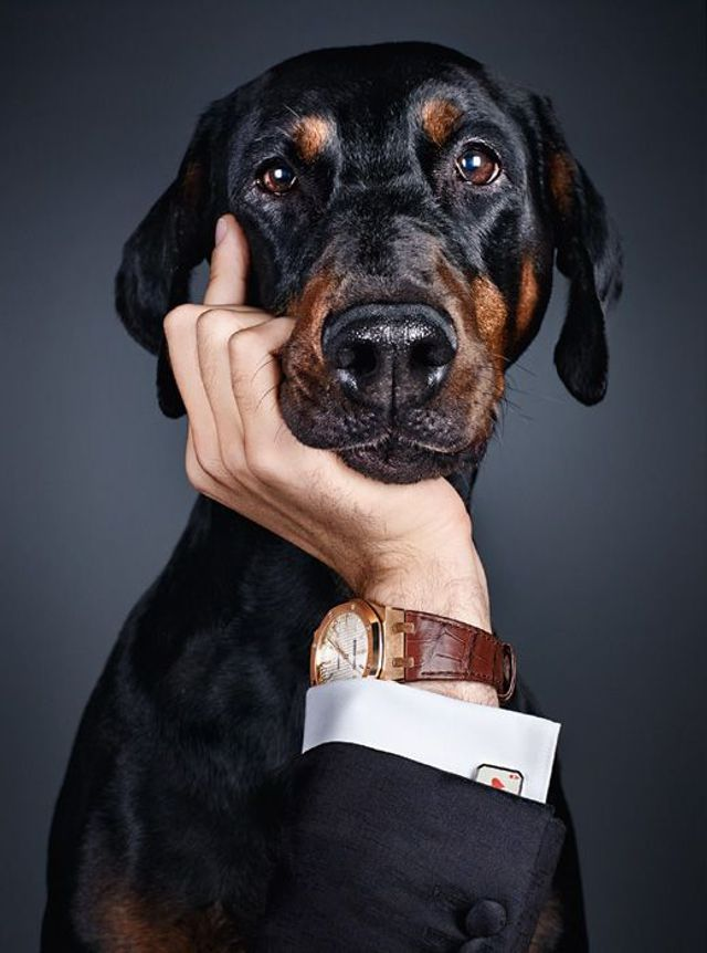 Photo of Dogs show the most beautiful watches of the new season – Süddeutsche Zeitung Magazi …