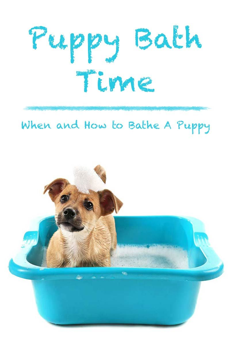 Puppy Bath Time When And How To Bathe A Puppy Bathing A Puppy