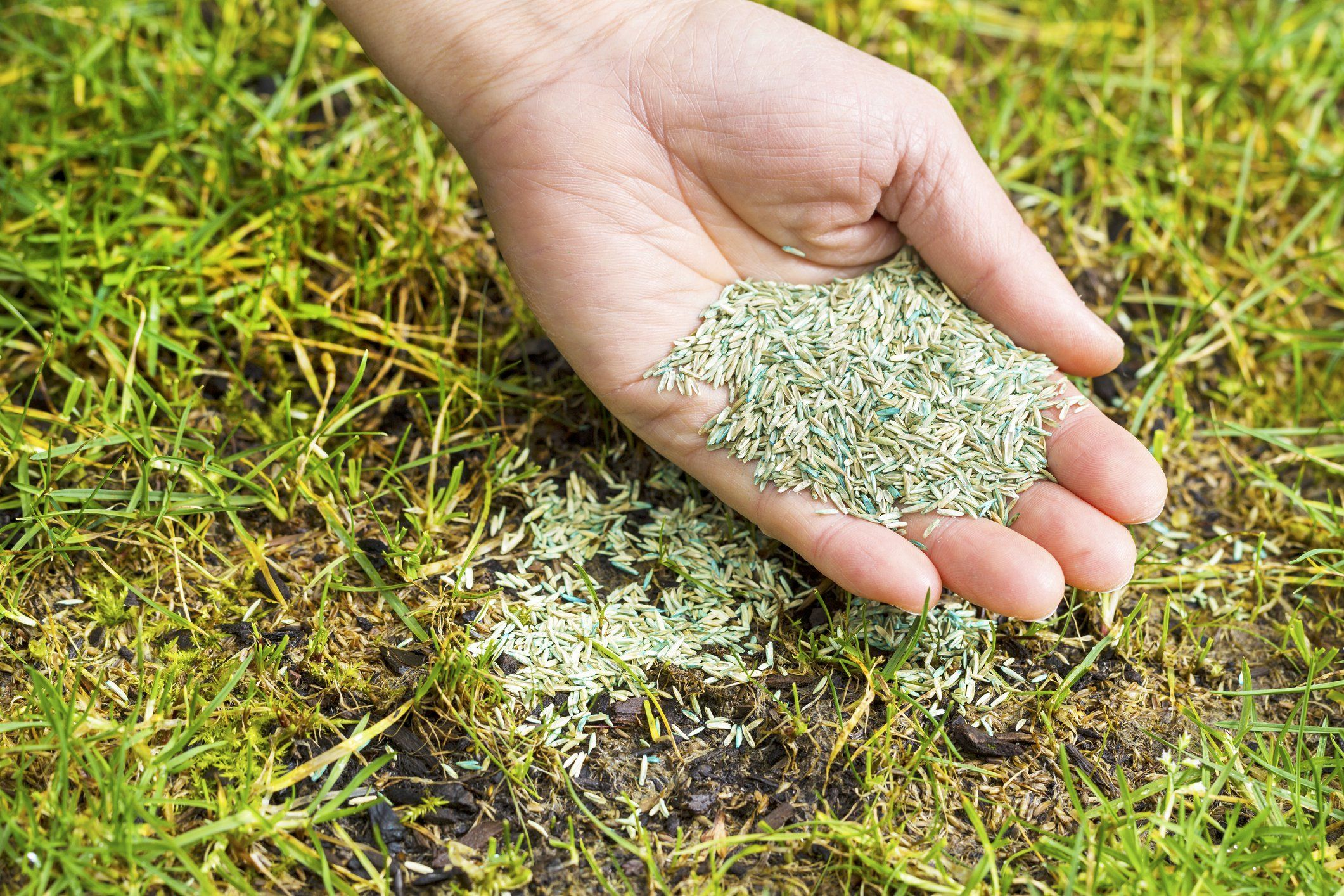 Tips For Reseeding Bare Spots In Your Lawn This Spring Growing