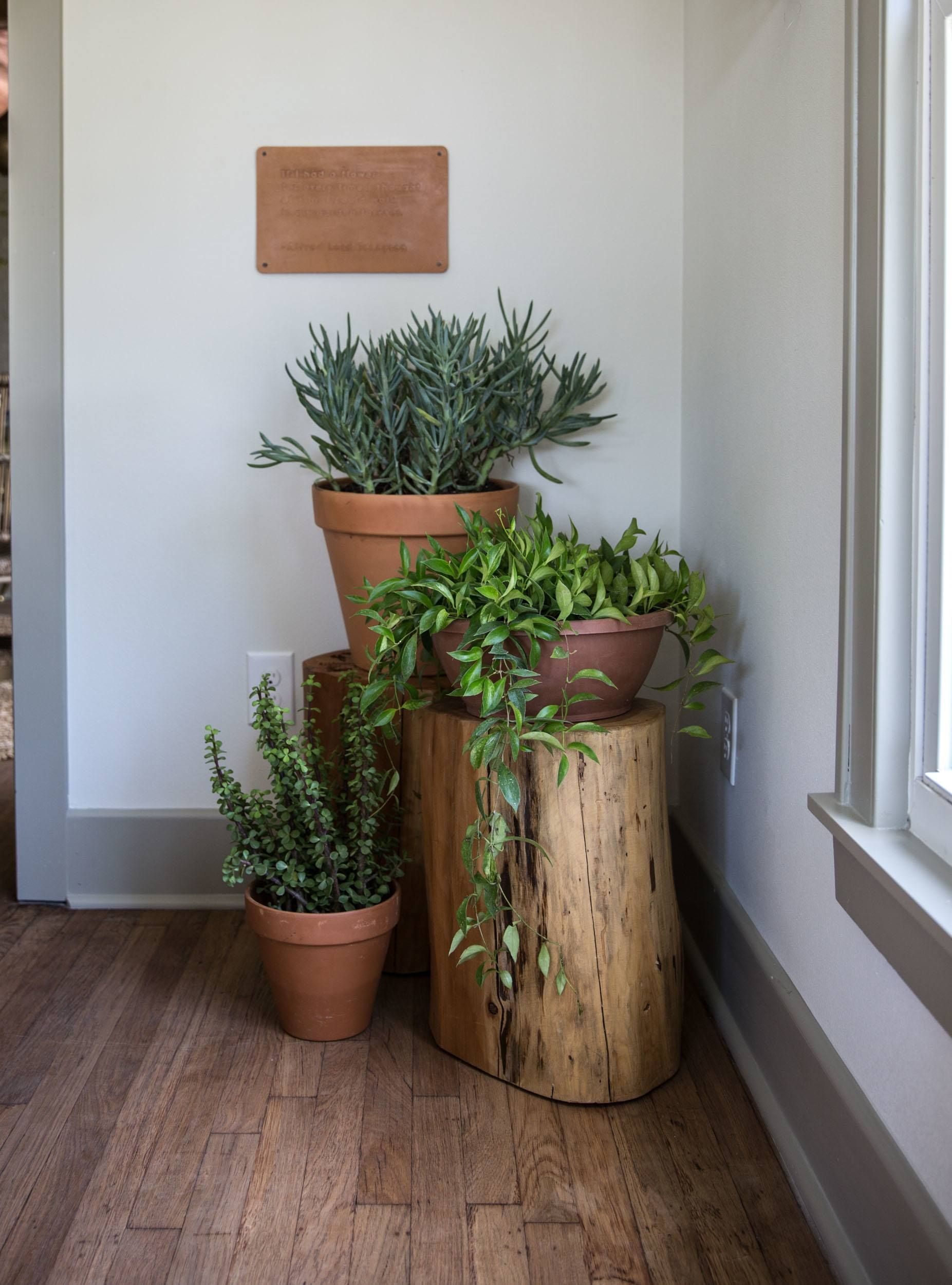 Plant Stand Indoor Living Rooms Diy