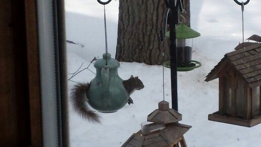 My new bird feeder is proving to be a hit....