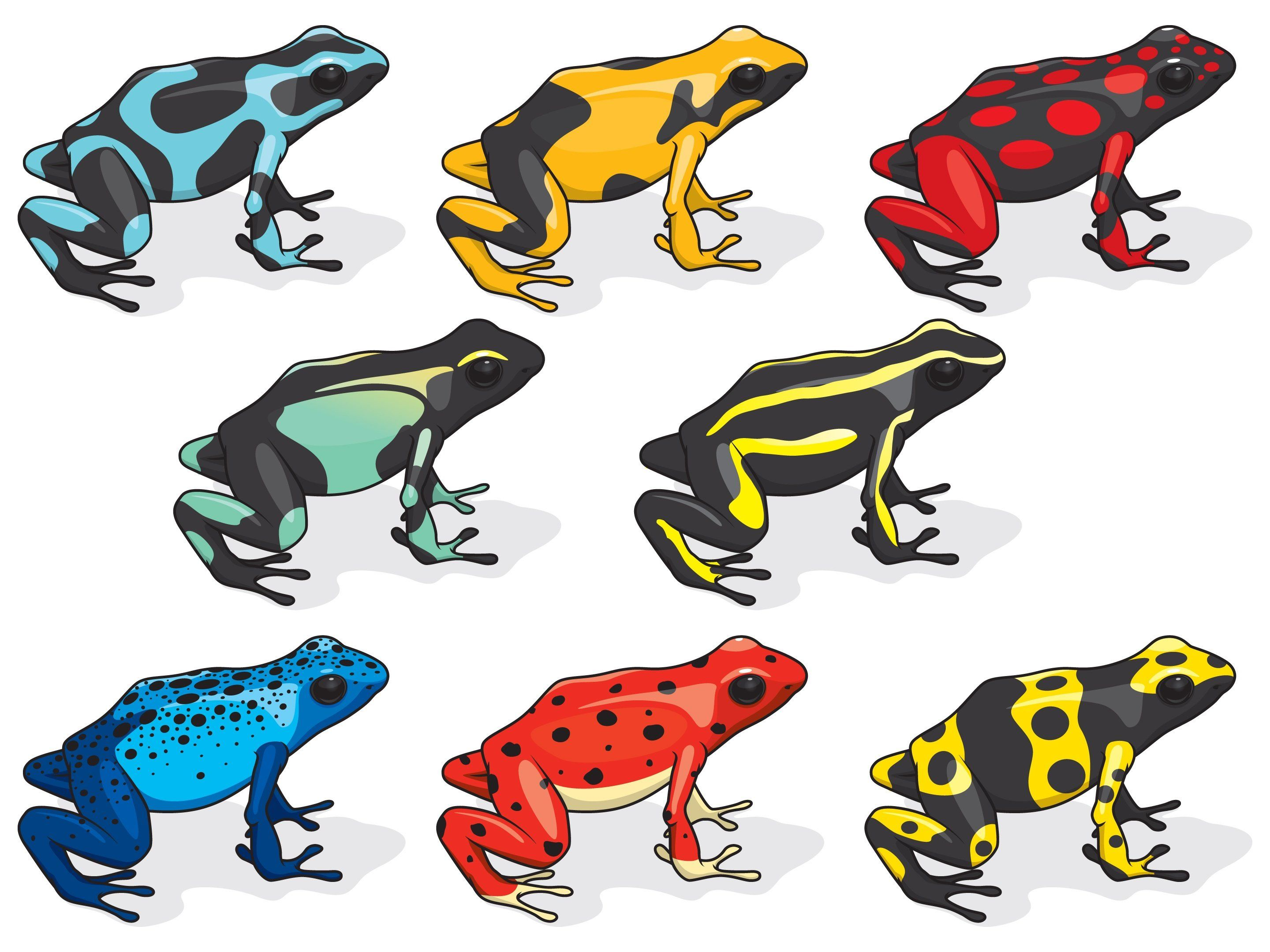 Poison Dart Frogs Pictures Saferbrowser Yahoo Image Search