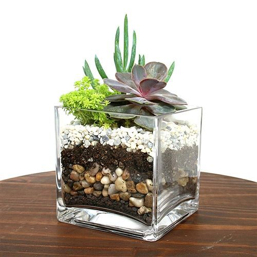Photo of Cube Succulent Terrarium Kit