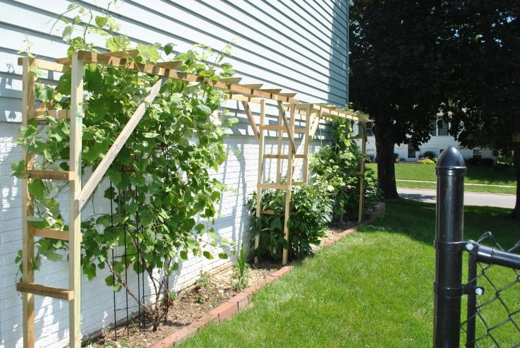 Grapevine trellis ideas google search cultivate your for Trellis or arbor