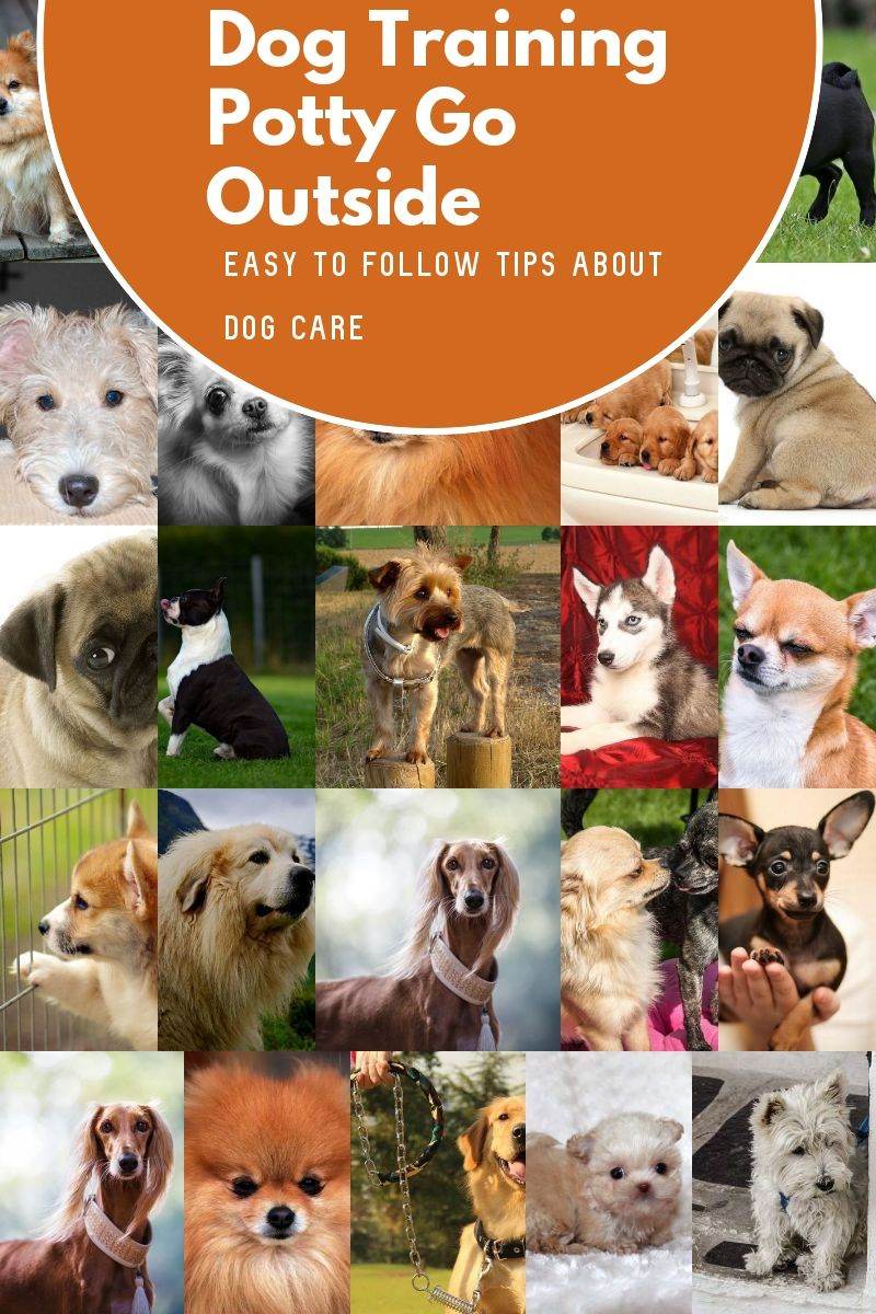 Dog Training Potty Go Outside Tips You Are Going To Benefit From Knowing Check Out The Image By Visiting In 2020 Dog Potty Training Dog Training Basic Dog Training