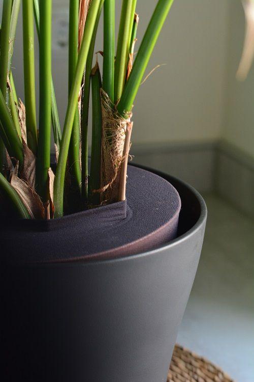 Blumen Und Zimmerpflanzen Kindersicher Machen Diy Kinderideen