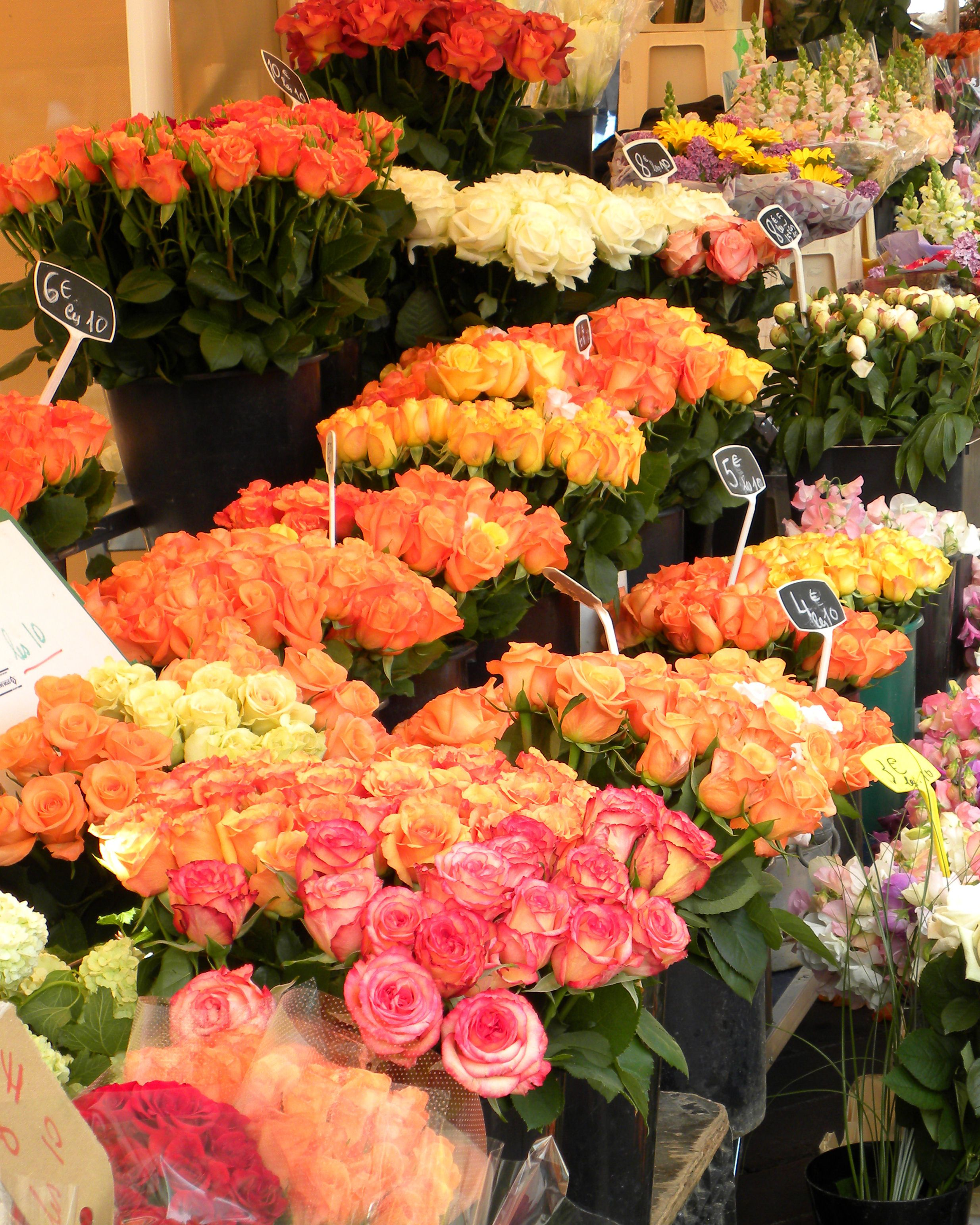 Cours saleya flower market in nice france beautiful flowers of cours saleya flower market in nice france beautiful flowers of all sorts and izmirmasajfo