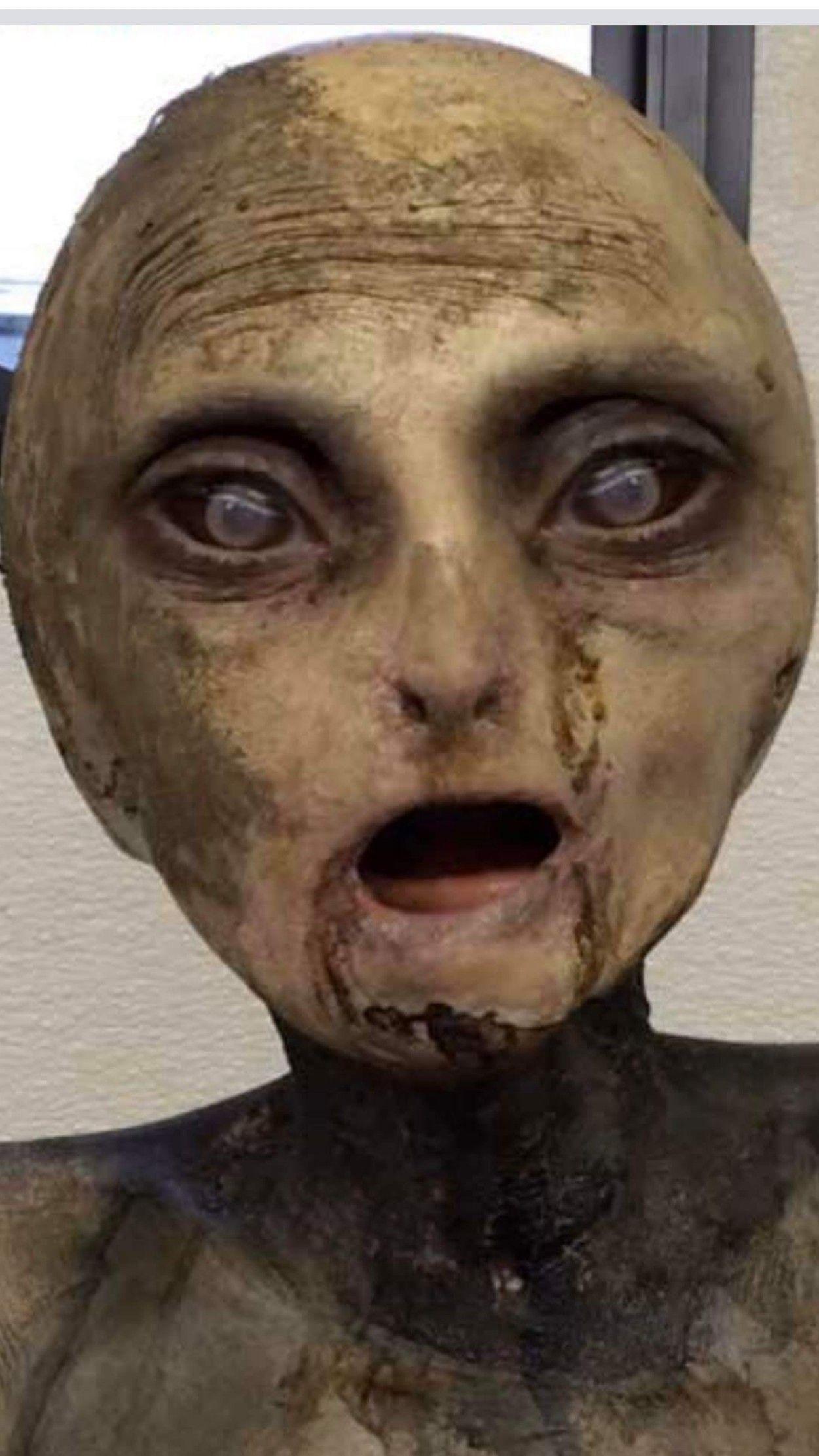 Alien Cadaver in 2020 Halloween face makeup, Face makeup