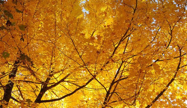 Best Fall Foliage In Alabama: 10 Places To See Autumn Colors As Leaves  Change