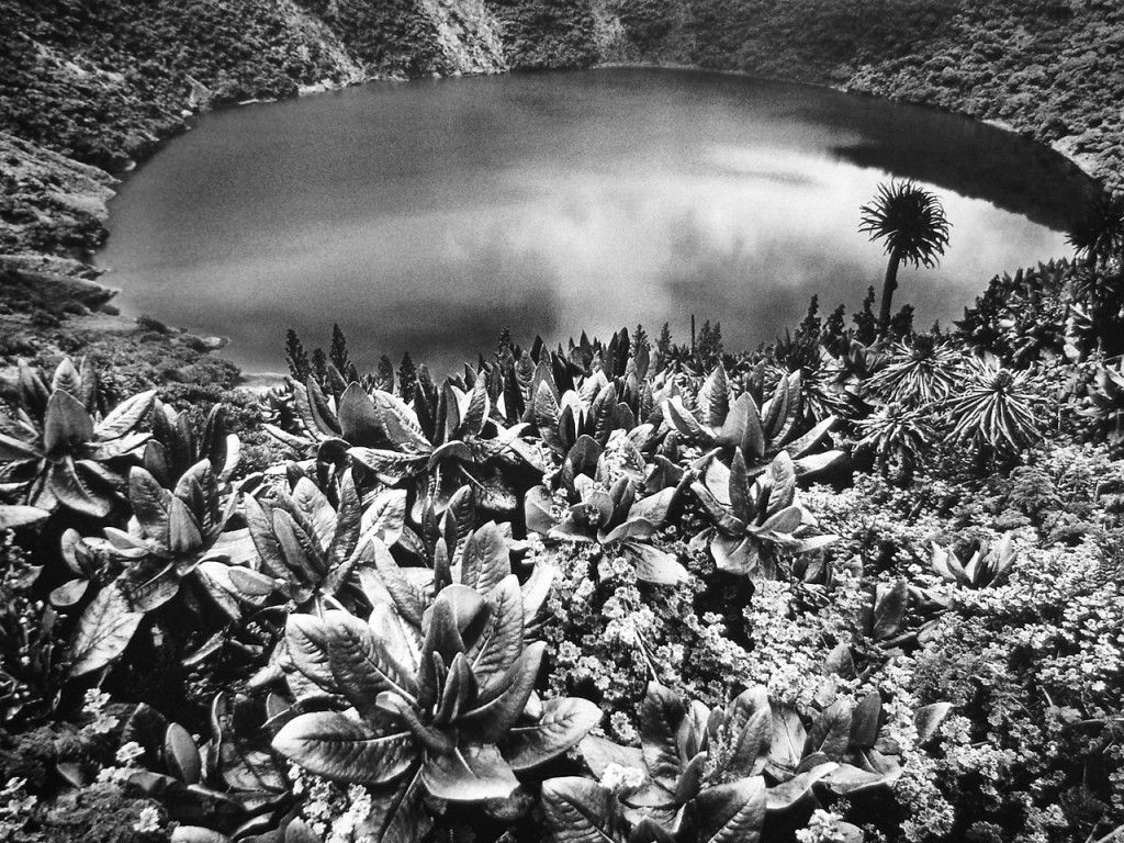 Sebastio Salgado photography. Together, Lélia and Sebastião have worked since the 1990's on the restoration of a small part of the Atlantic Forest in Brazil. In 1998 they succeeded in turning this land into a nature reserve and created the Instituto Terra. The Instituto is dedicated to a mission of reforestation, conservation and environmental education.