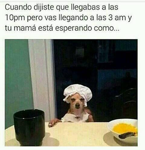 Memes Muy Graciosos En Espanol Cuando Llegas A Casa Mas Tarde Memes Graciosos Memes Chistosos En Espanol Memes Geniales