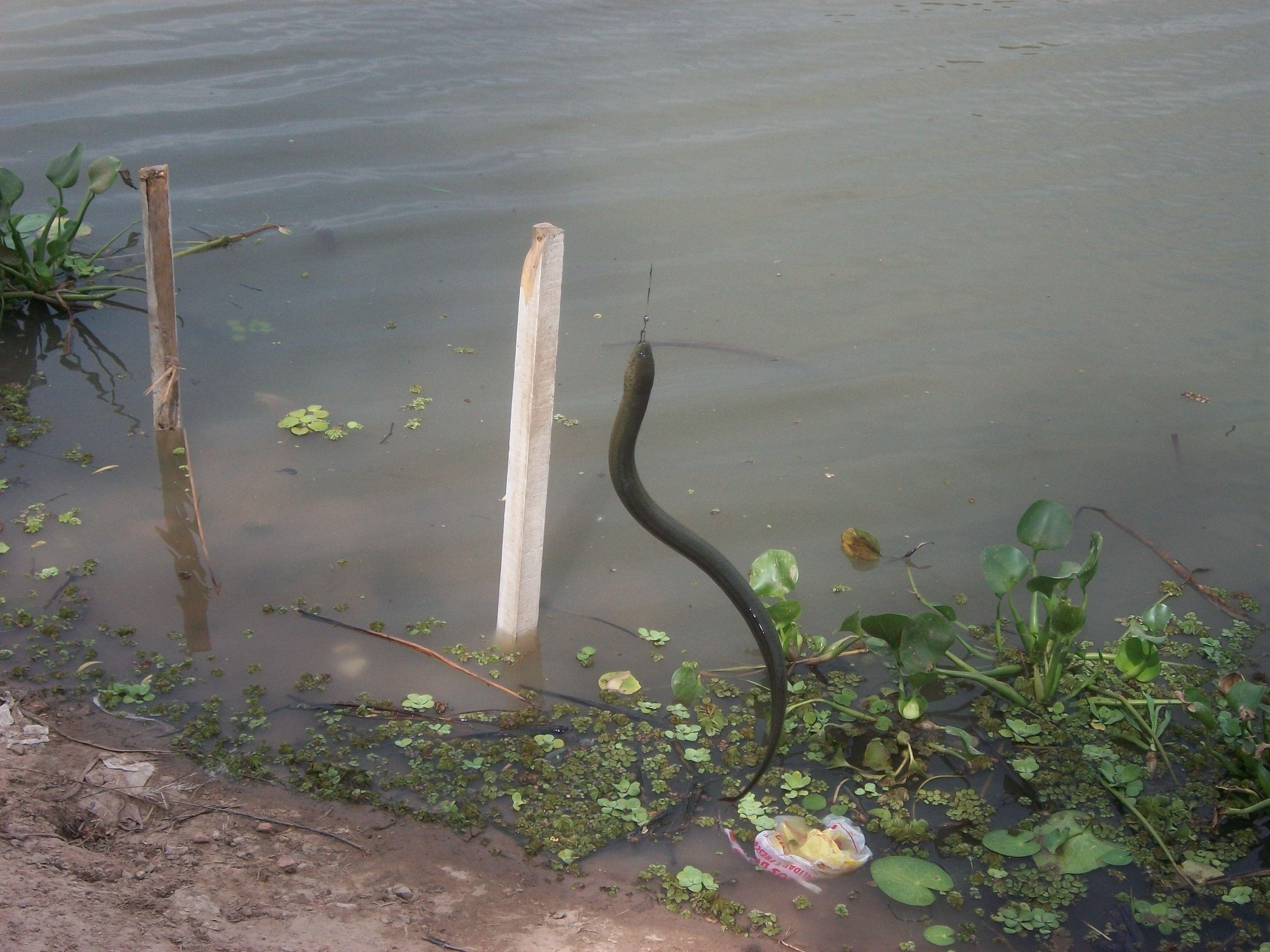 San Pedro, pescando una anguila en el río...