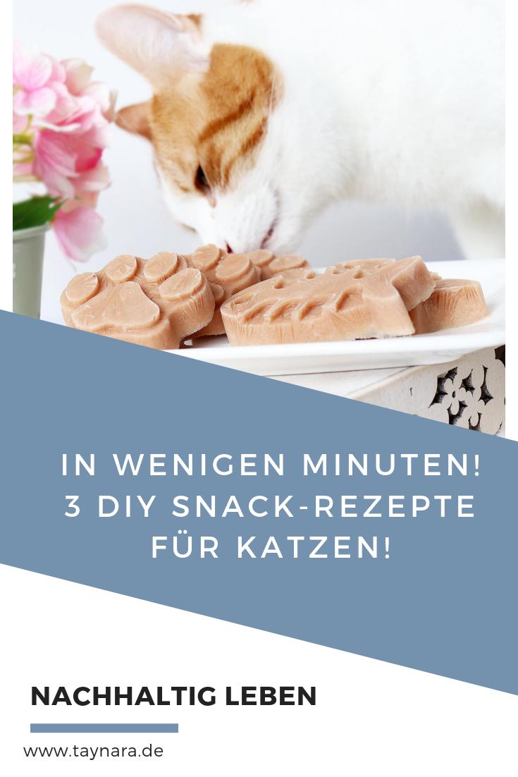 Erfrischend und lecker 3 DIY Snacks für Katzen Katzen