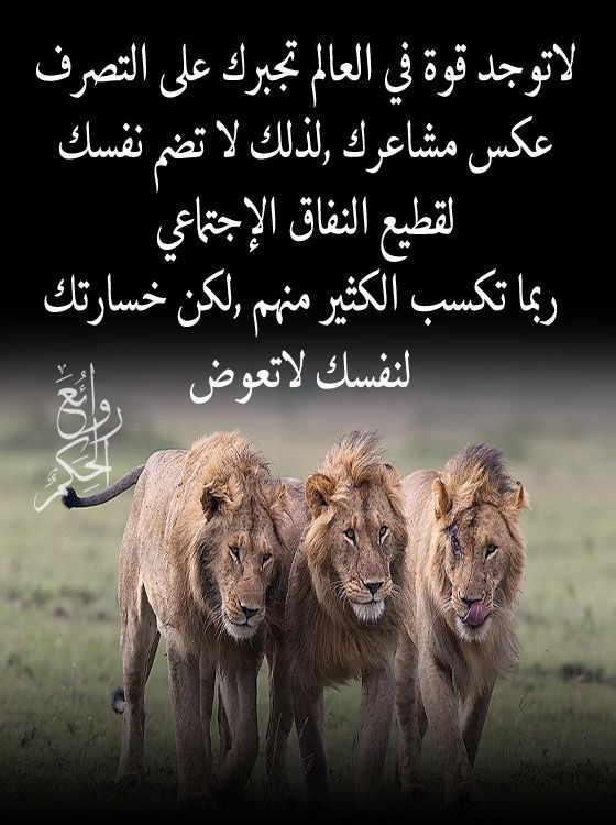 خسارتك لنفسك لاتعوض Arabic Funny Friends Quotes Arabic Quotes