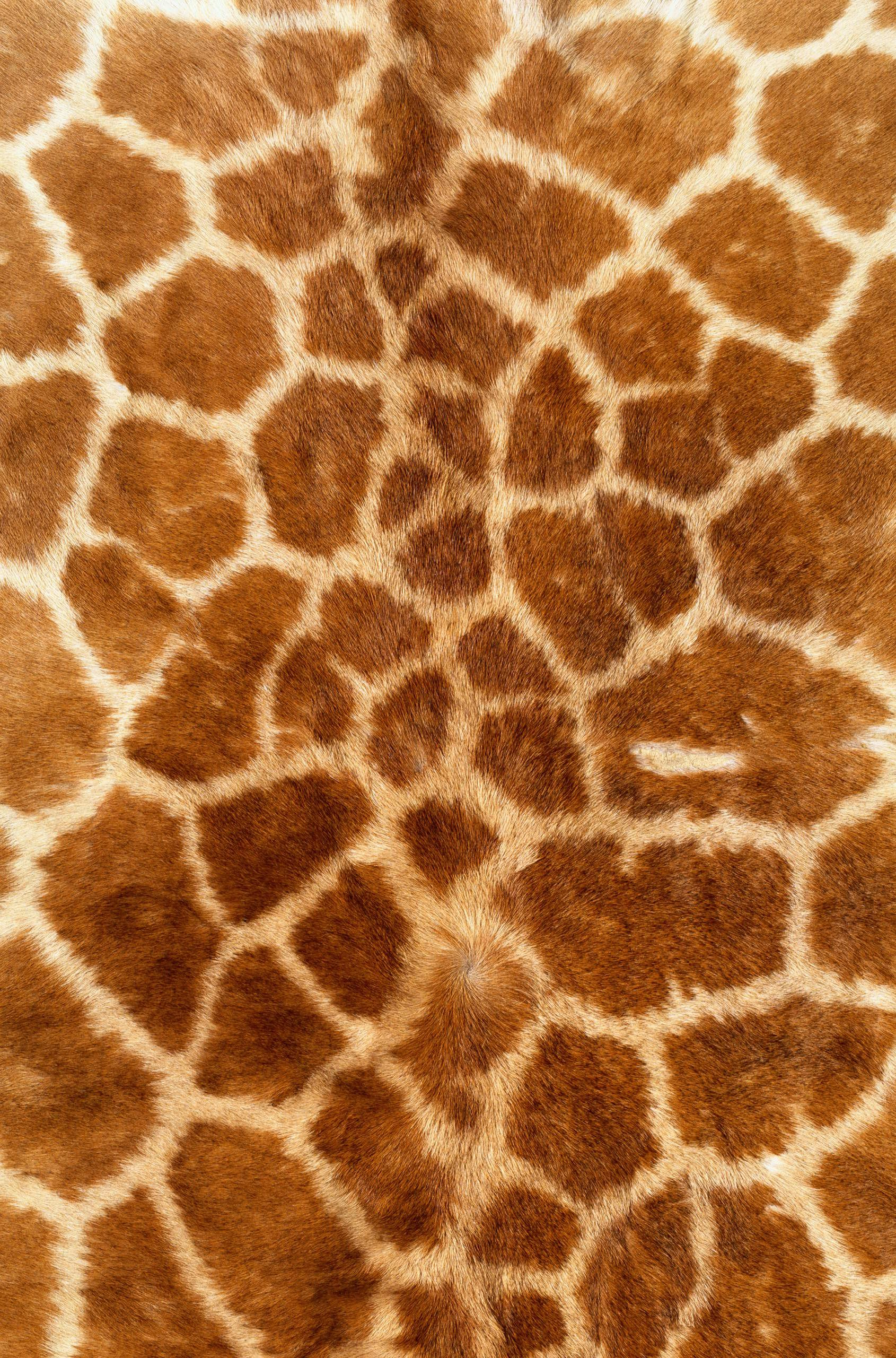 Animal Print Iphone 5 Wallpaper мех Skin Giraffe Texture Fur Fur Texture Background