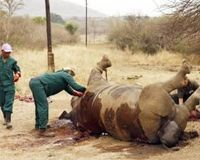 PETITION ~~ Stop Hunting Endangered White Rhinos ~~ Target: Ezemvelo CEO, Dr Bandile Mkhize  Sponsored by: Animal Advocates  Despite people willing to raise money to save and remove a white rhino, a KNZ businessman paid for the right to hunt and kill an endangered white rhino in the Hluhluwe game reserve, as advertised online.    Park administrators of Ezemvelo KZN Wildlife invited holders of hunting licences to bid to kill the rhino in a tender that was advertised online