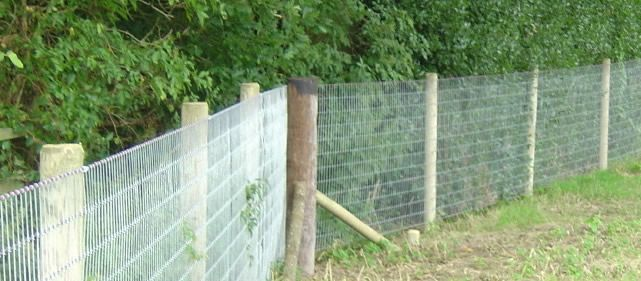Horse V Wire Fencing Options Google Search Fences