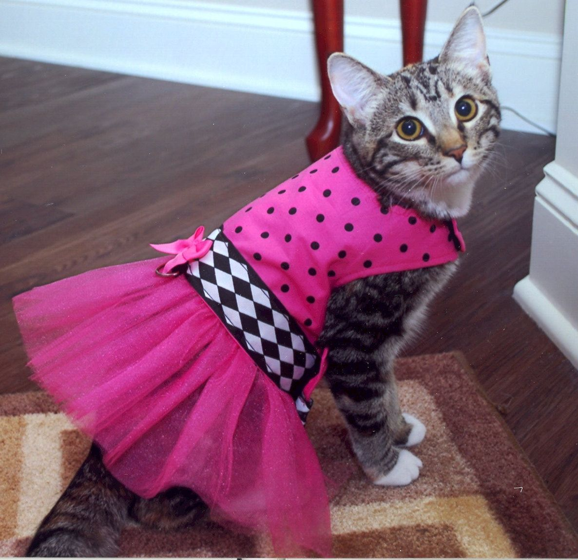 Rockindogs Pink And Black Polkadot Tutu Dress For Cats 24 95 Kittens In Costumes Pet Costumes Cat Clothes