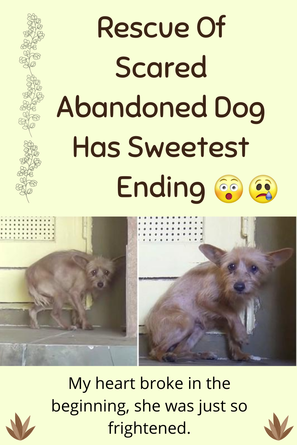 Rescue Of Terrified Abandoned Dog Grabs Hearts Rescue Dogs Dog Names