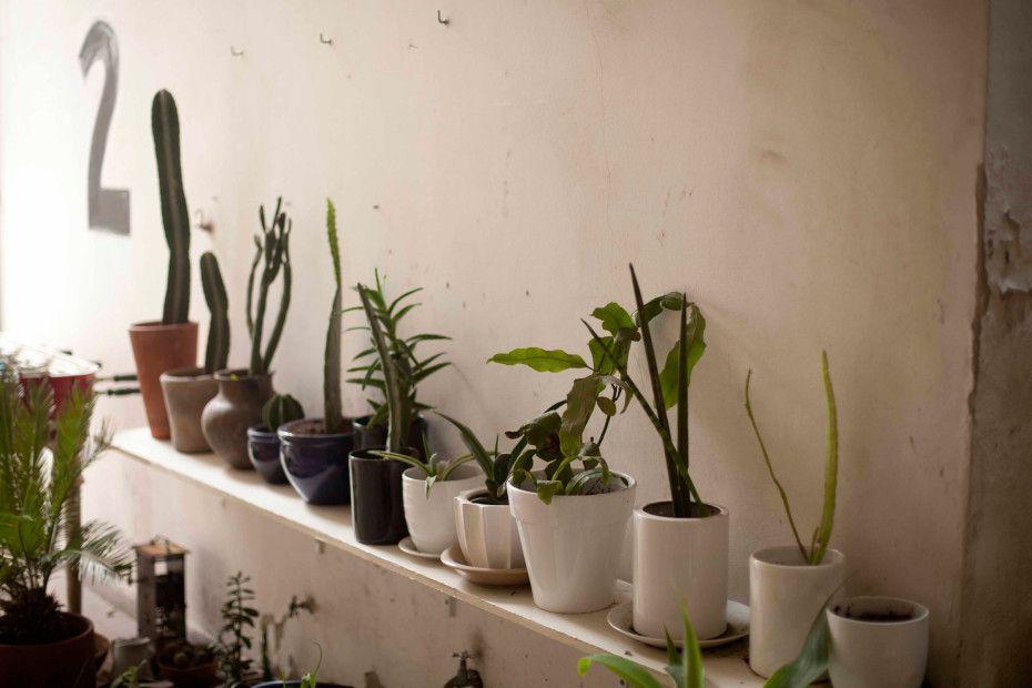 Marcia Krygier's cactus collection — Colegiales, Buenos Aires — http://www.freundevonfreunden.com/interviews/marcia-krygier/