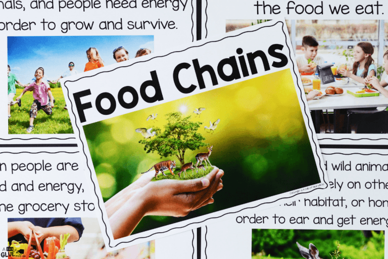 Food Chains Grassland biome, Food chain activities