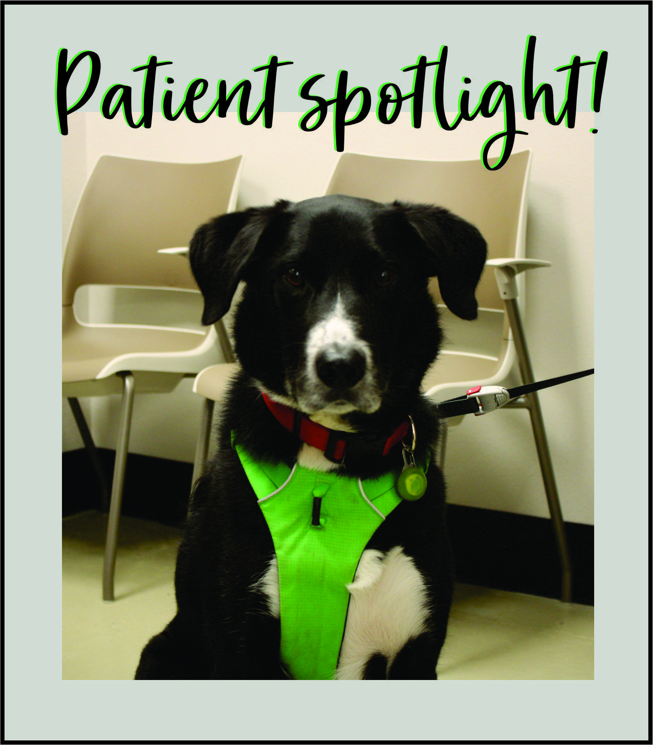 "Patient Spotlight ""Oliver"" Veterinary Wellness Center 1050"