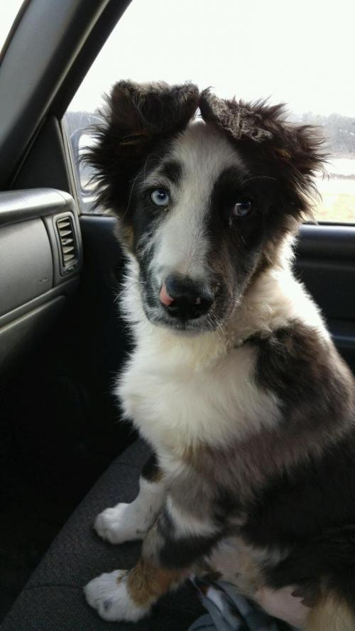 Adopt Mason on Pets, Adoption, Pup