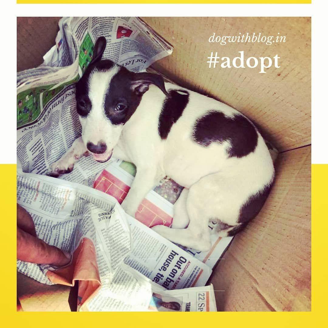 Delhi adoption. Cute puppies, Dog adoption, Homeless dogs