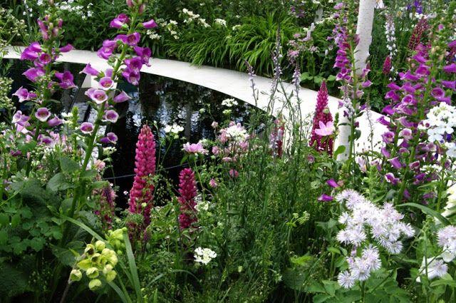 Modne Rosliny Miododajne I Glowaczek Olbrzymi Garden Arch Plants Garden