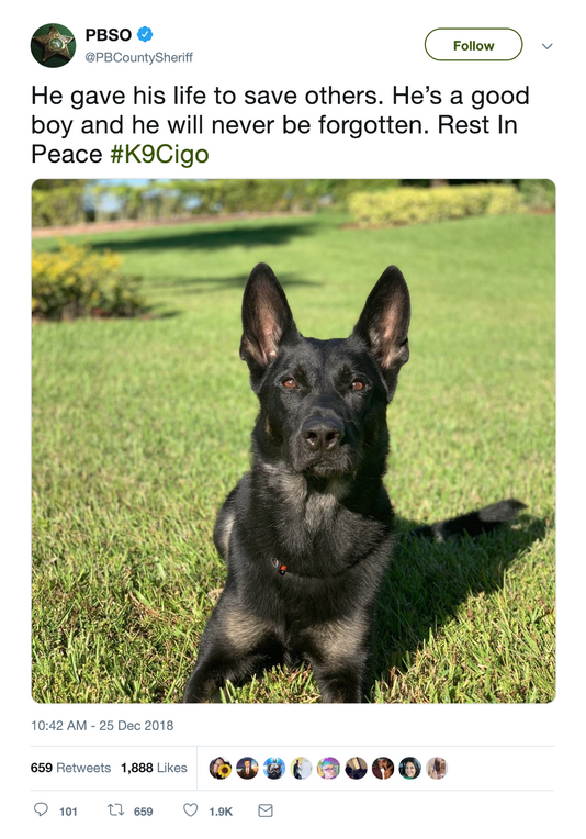 He Gave His Life To Save Others Hes A Good Boy Police Mourn K 9 Slain On Christmas Eve Police Dogs Puppy Care Online Pet Supplies