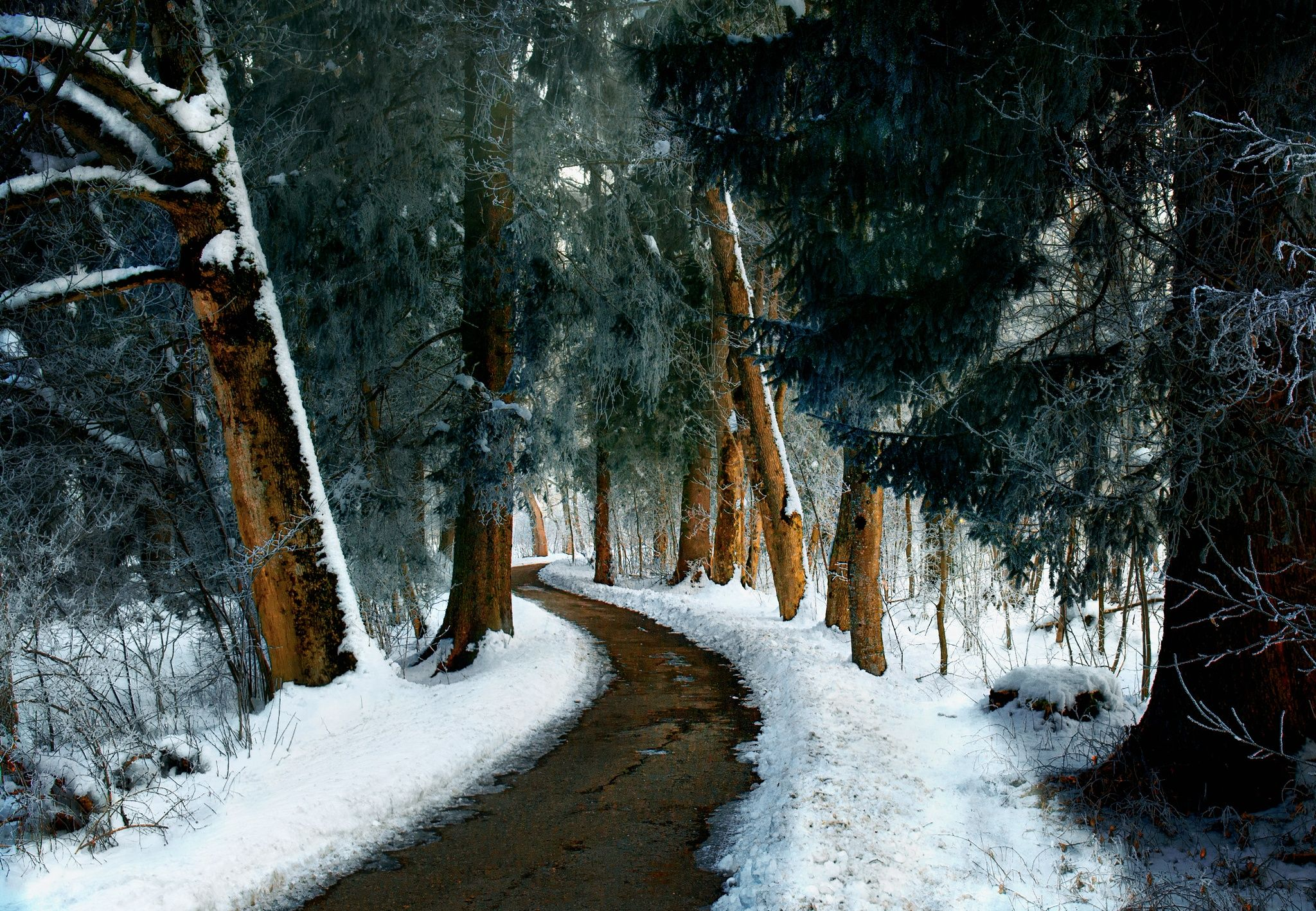 The path is cleared by Gabriele Wahl on 500px