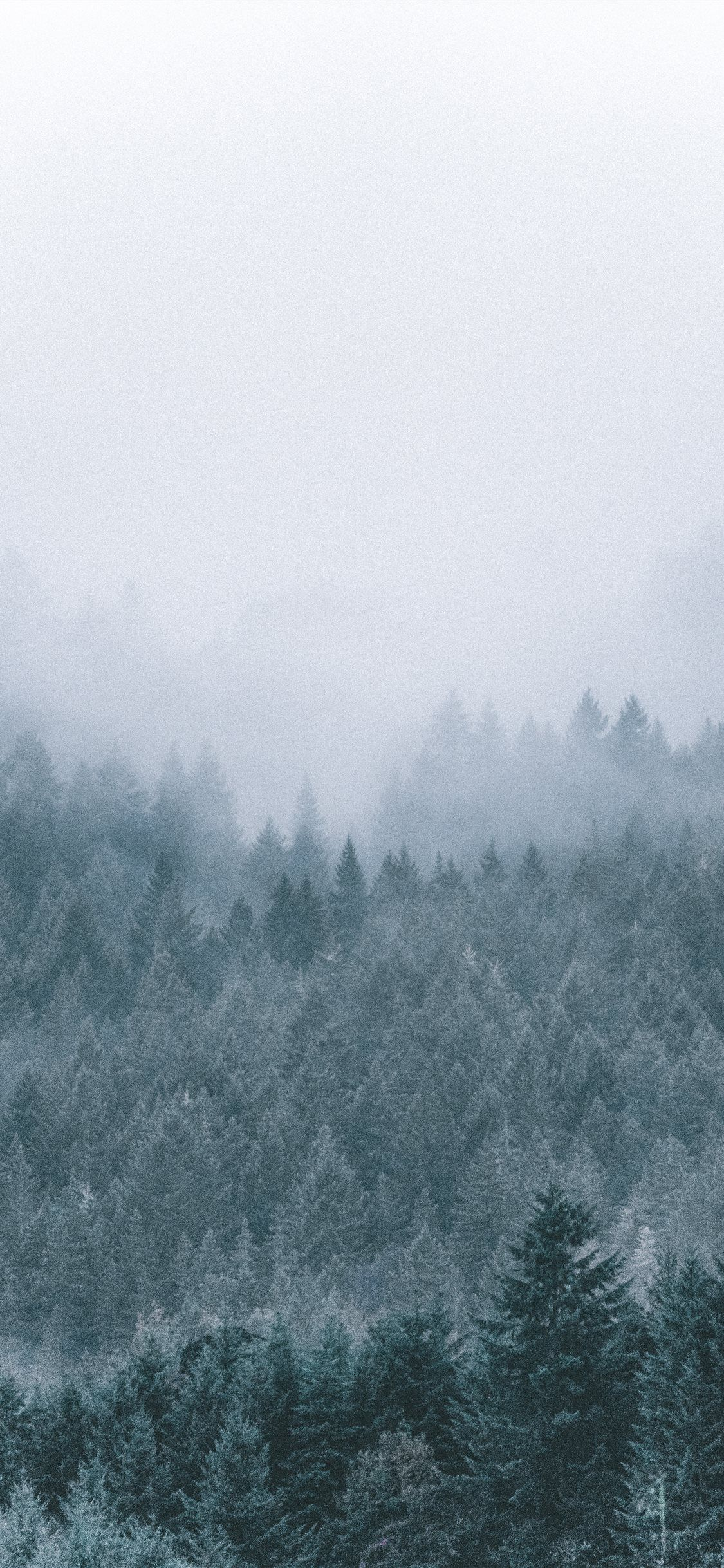 Free Download The Foggy Icy Green Pine Trees Scenery Wallpaper Beaty Your Iphone Tree Snow Scenery Wallpaper Tree Scenery Wallpaper Snow Wallpaper Iphone