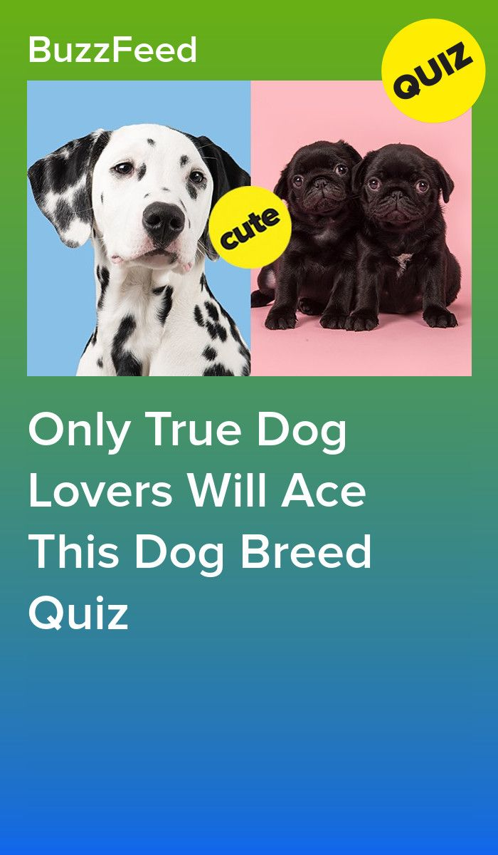 Only True Dog Lovers Will Ace This Dog Breed Quiz Dog