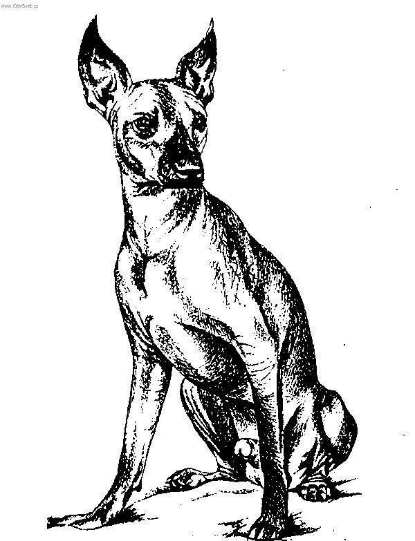 Xoloitzcuintle Ilustración Chilos Tattos Xolos