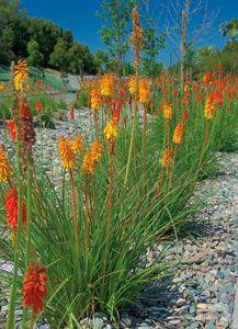 plants drought resistant san diego